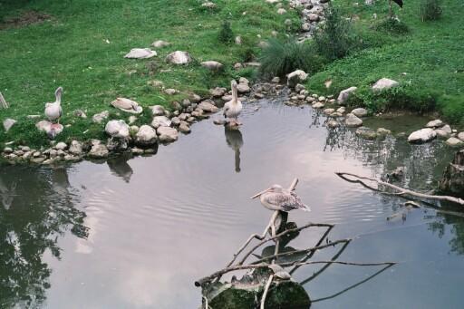 Vögel am Wasser