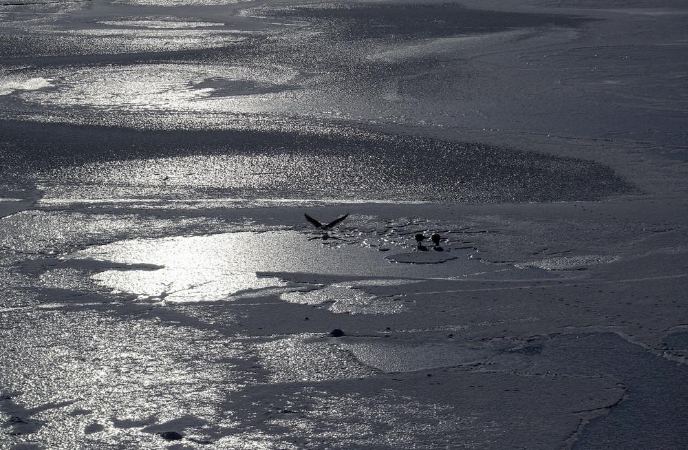Vögel auf dem Eis 1