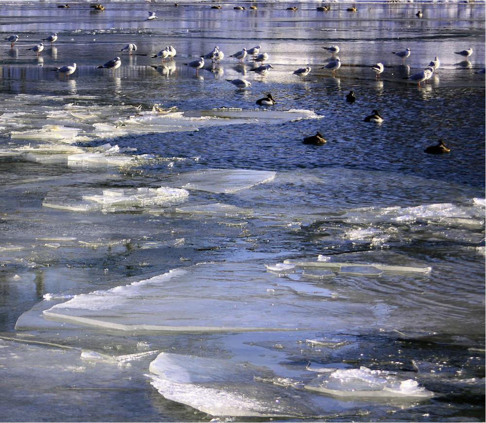 Vögel auf dem Eis2