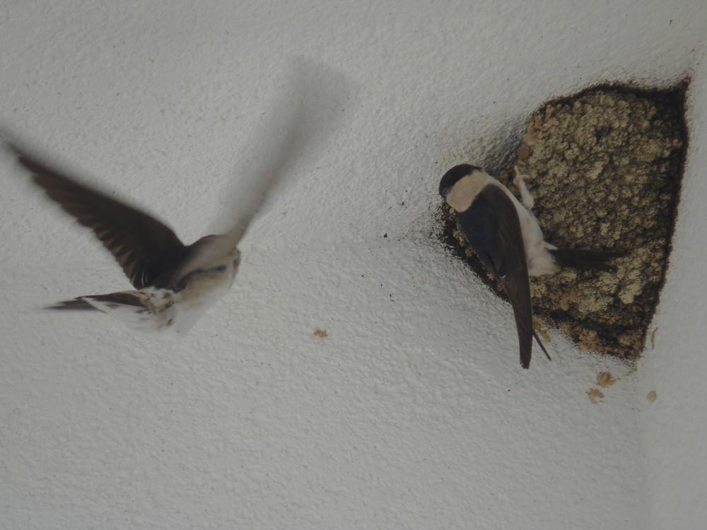 vögel auf der terasse
