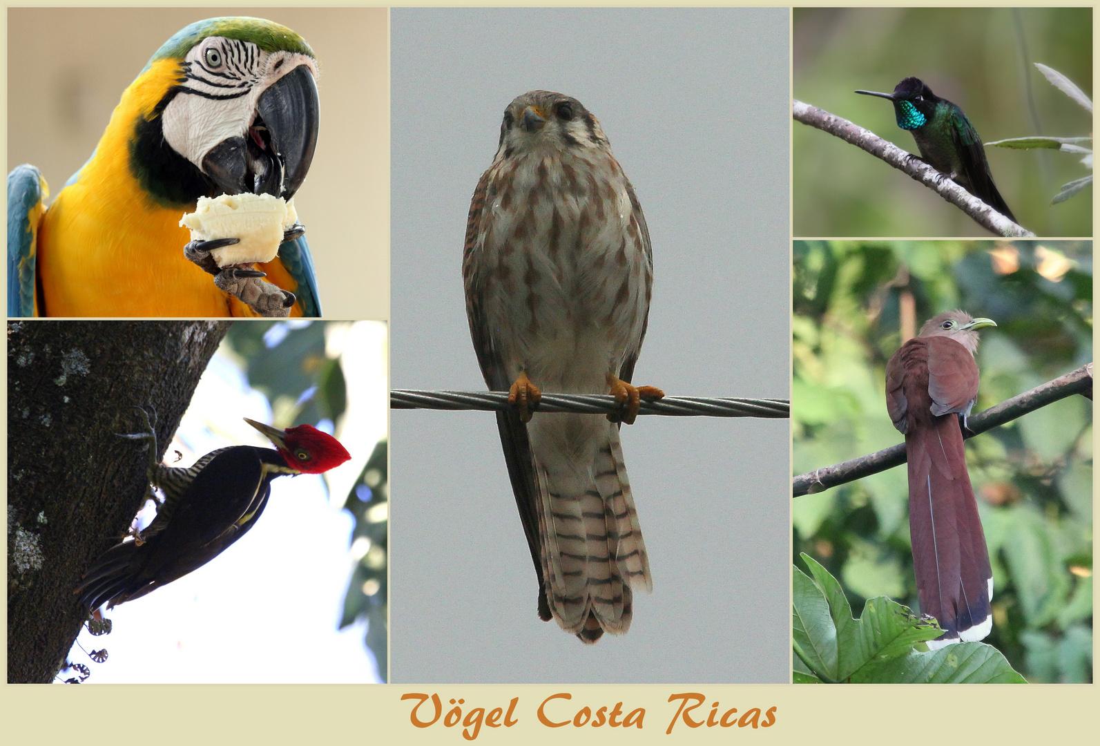 Vögel ...