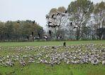 Vögel des Glücks