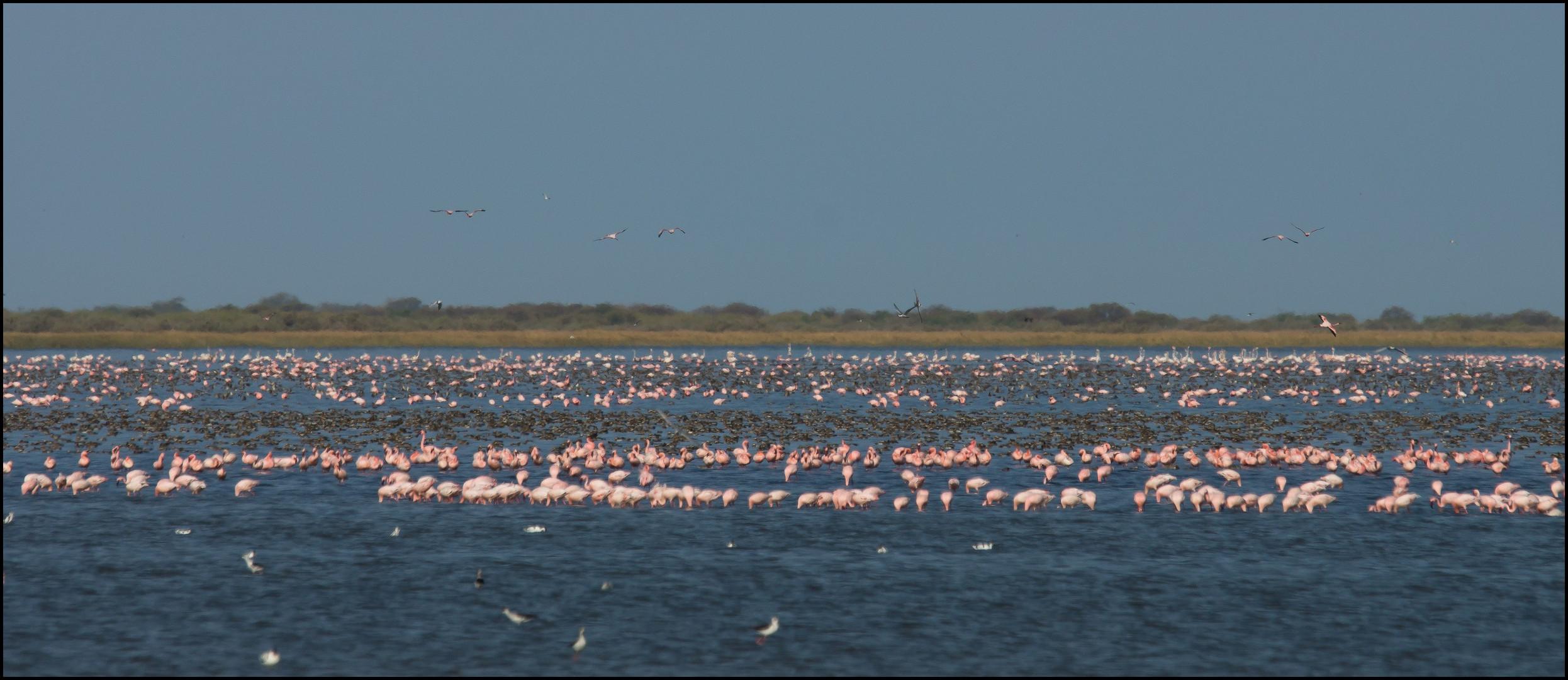 Vögel en masse