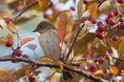 Vögel im Garten 1