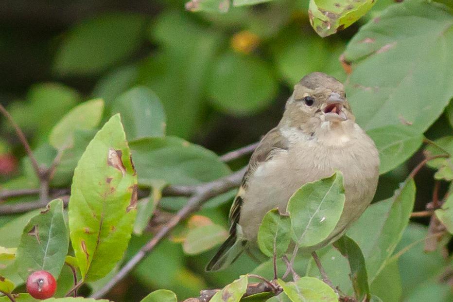Vögel im Garten 3