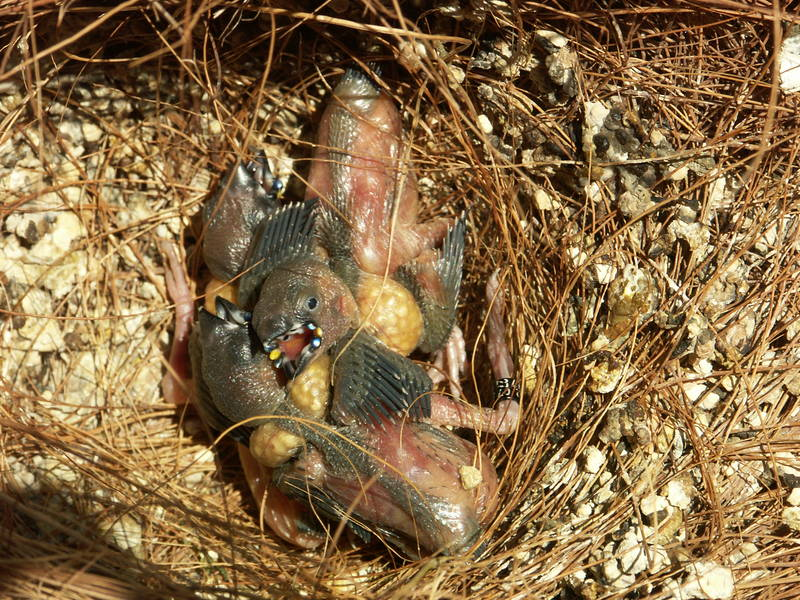 Vögel im Nest