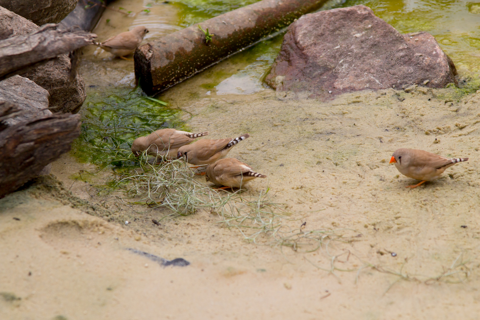 Vögel im Schmetterlings-Park auf Fehmarn