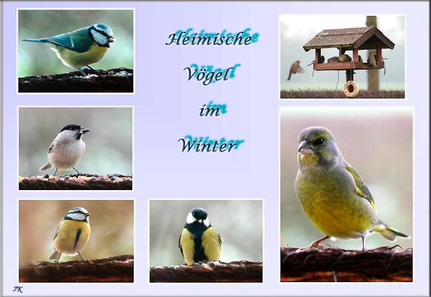 v gel im winter foto bild tiere wildlife wild. Black Bedroom Furniture Sets. Home Design Ideas