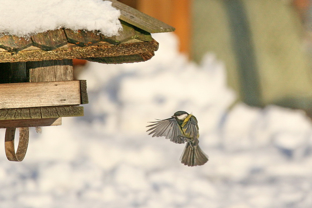 Vögel im Winter 1