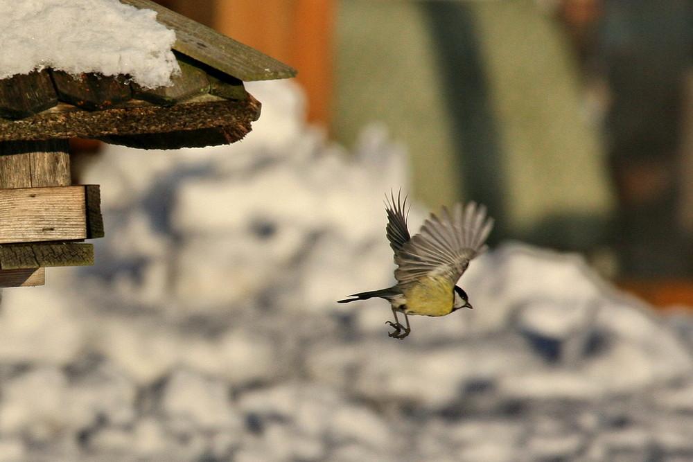 Vögel im Winter 2