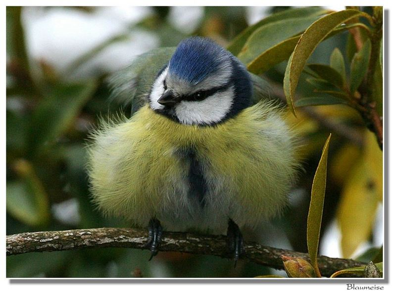 Vögel im Winter ( 2 )
