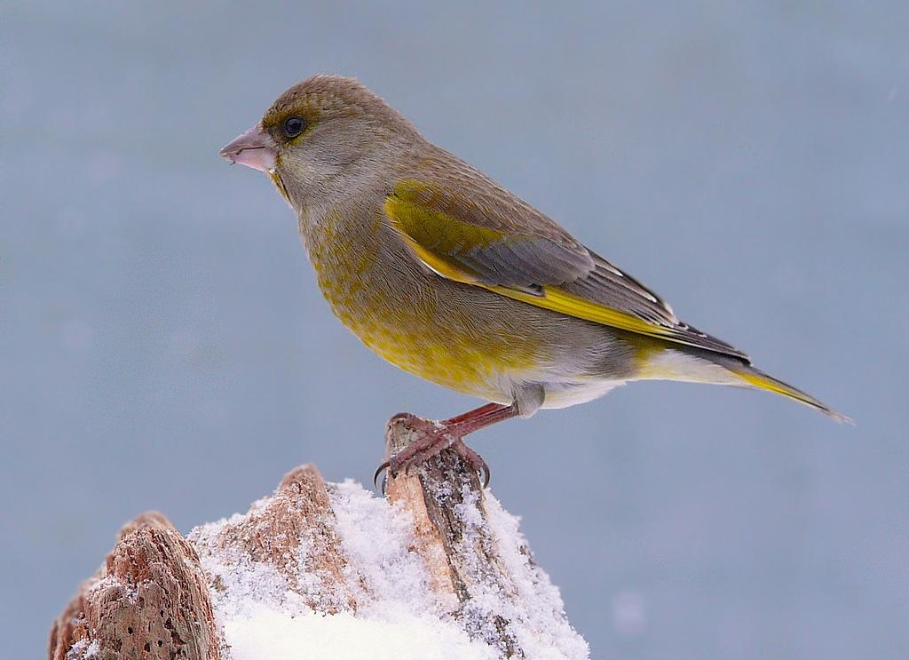 Vögel im Winter...