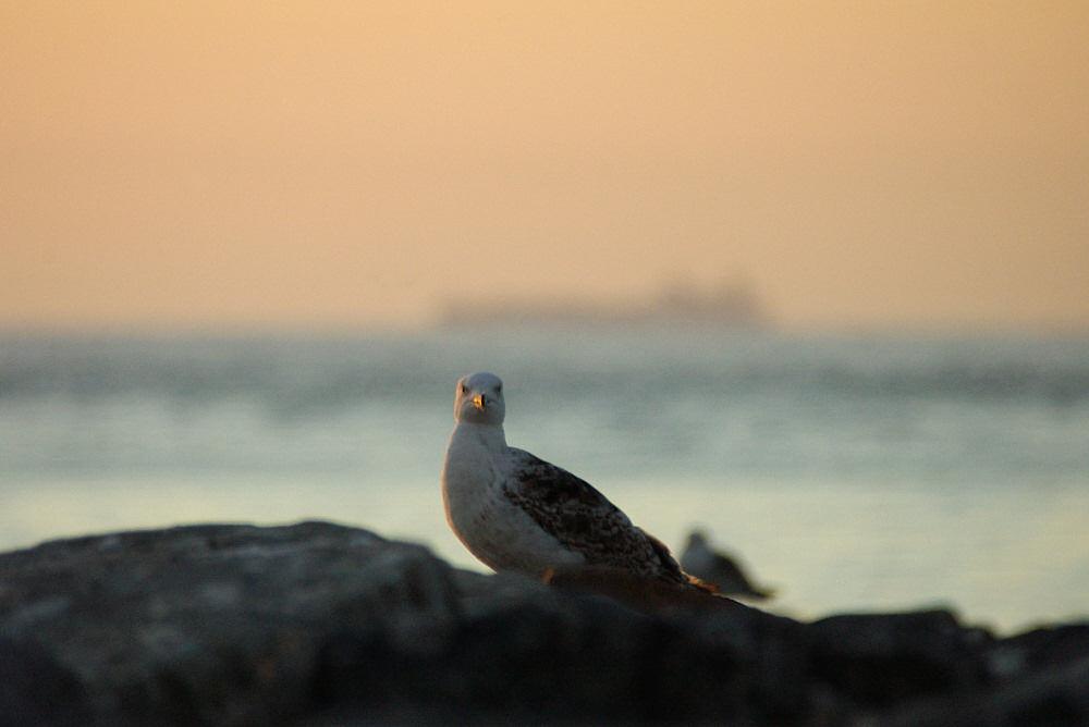 Vögel in der letzten Abendsonne