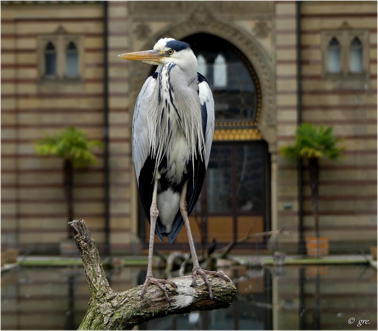 Vögel in der Wilhelma..