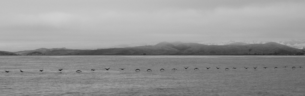 Vögel in Formation (Morro Bay)