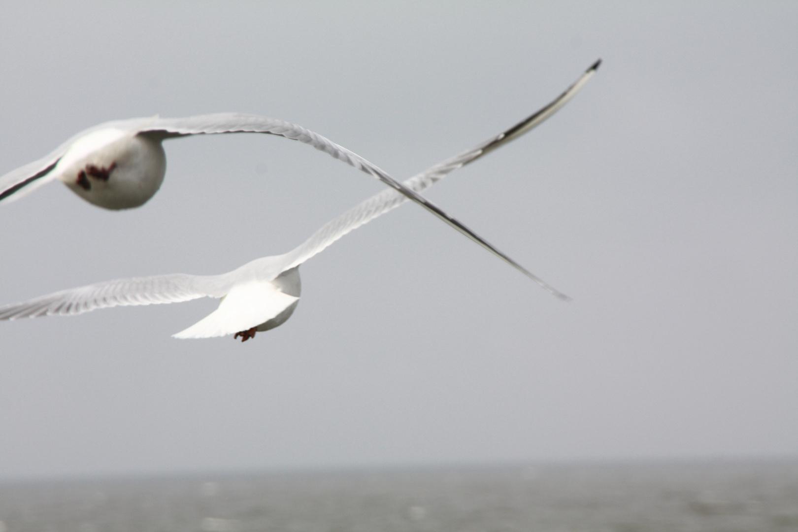 Vögel Insel Usedom