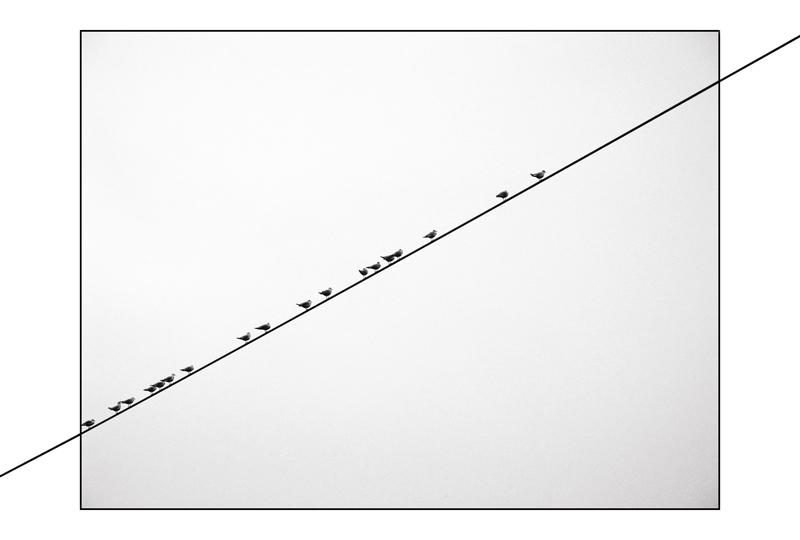 vögel ohne ende