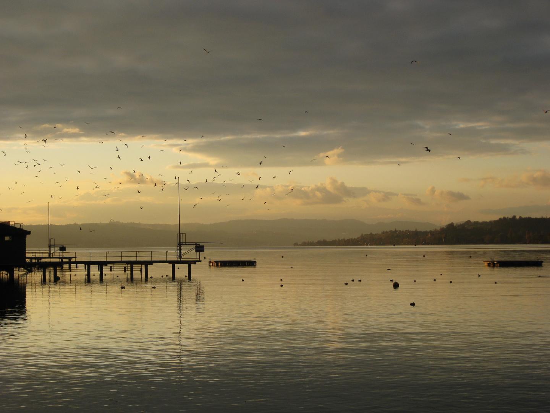 Vögel Rapperswil