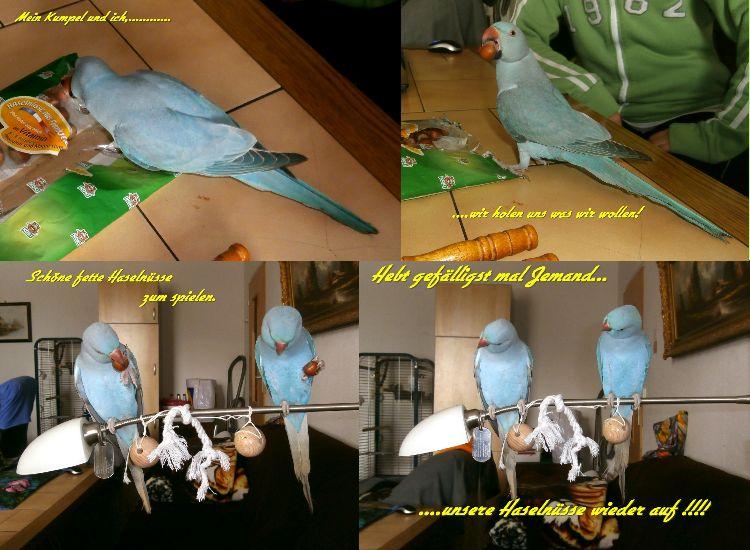 Vögel sind auch nicht dumm!!!!