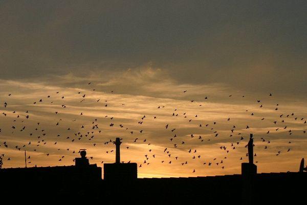 Vögel über der Stadt