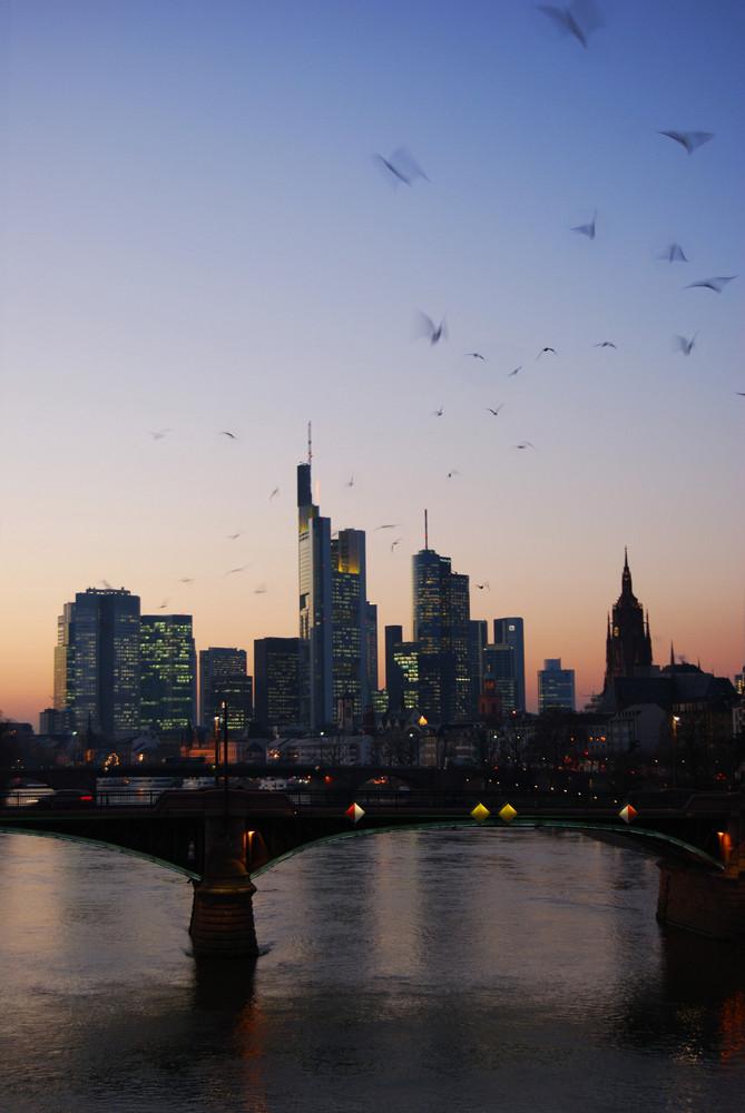 Vögel über Frankfurt