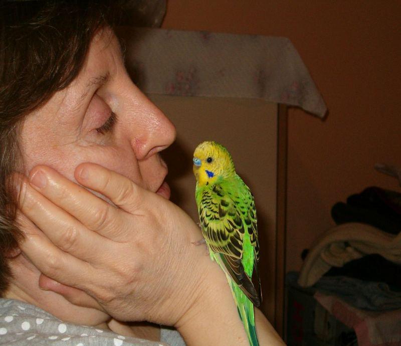 vögel und frau