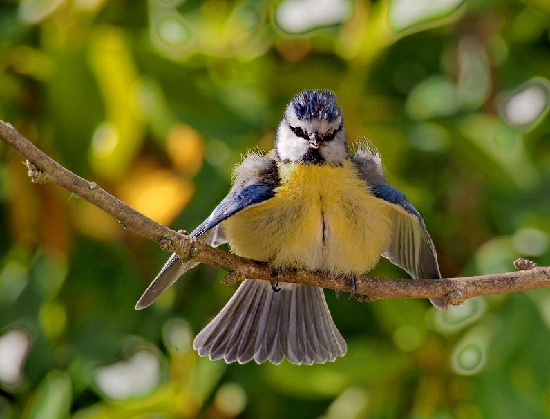 vögel von Cabrida