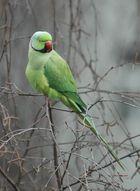 Vögel6