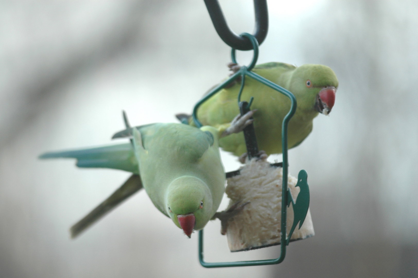Vögel8