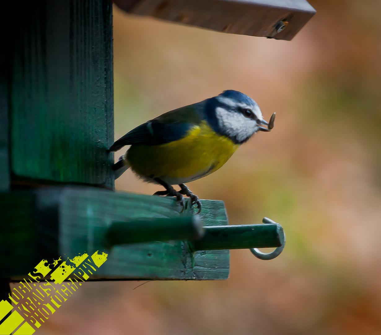 Vögelchen.....