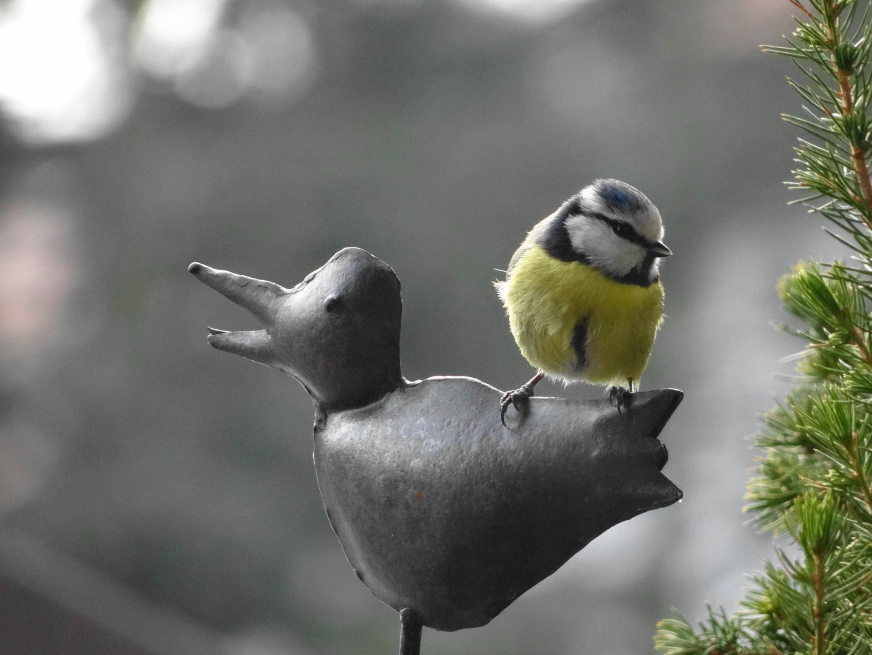 Vögelchen auf Vögelchen