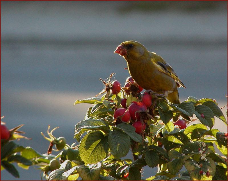 Vögelchen im Gegenlicht