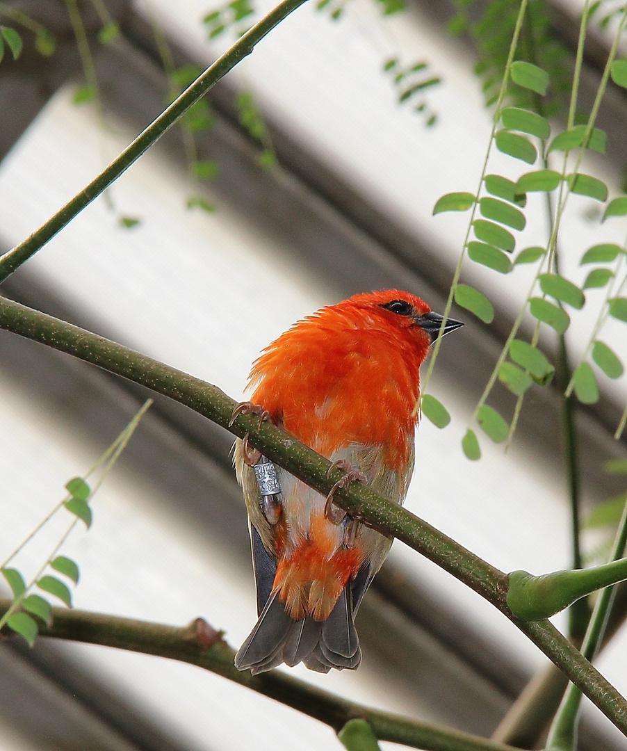 Vögelchen in orange