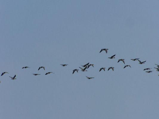 Vögeln =)