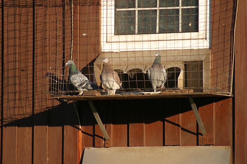 Vögeln hinter Gittern