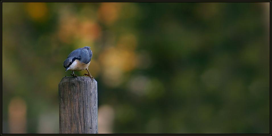 Vögeln in den Isarauen...