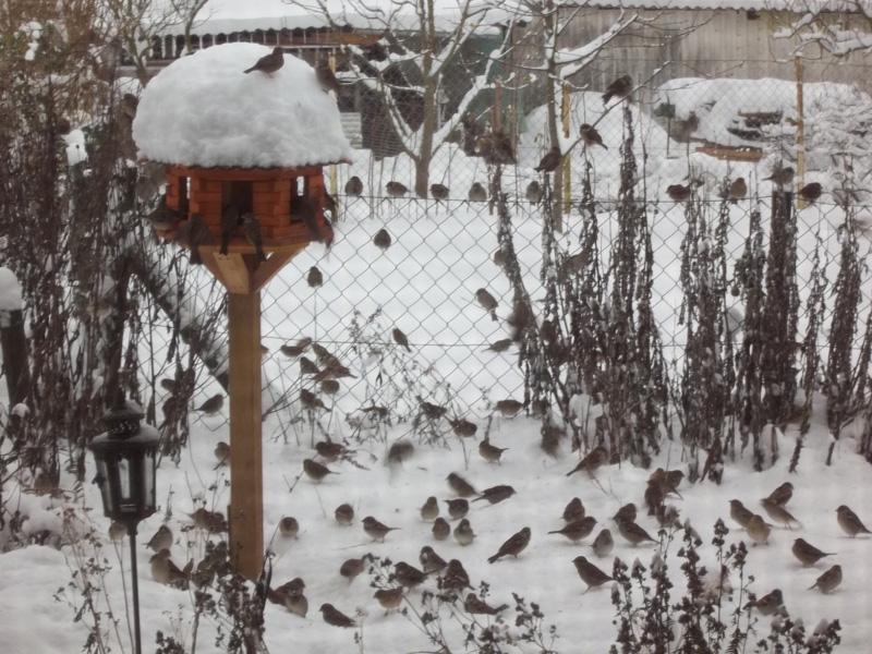 Vögeln soll man 3x täglich