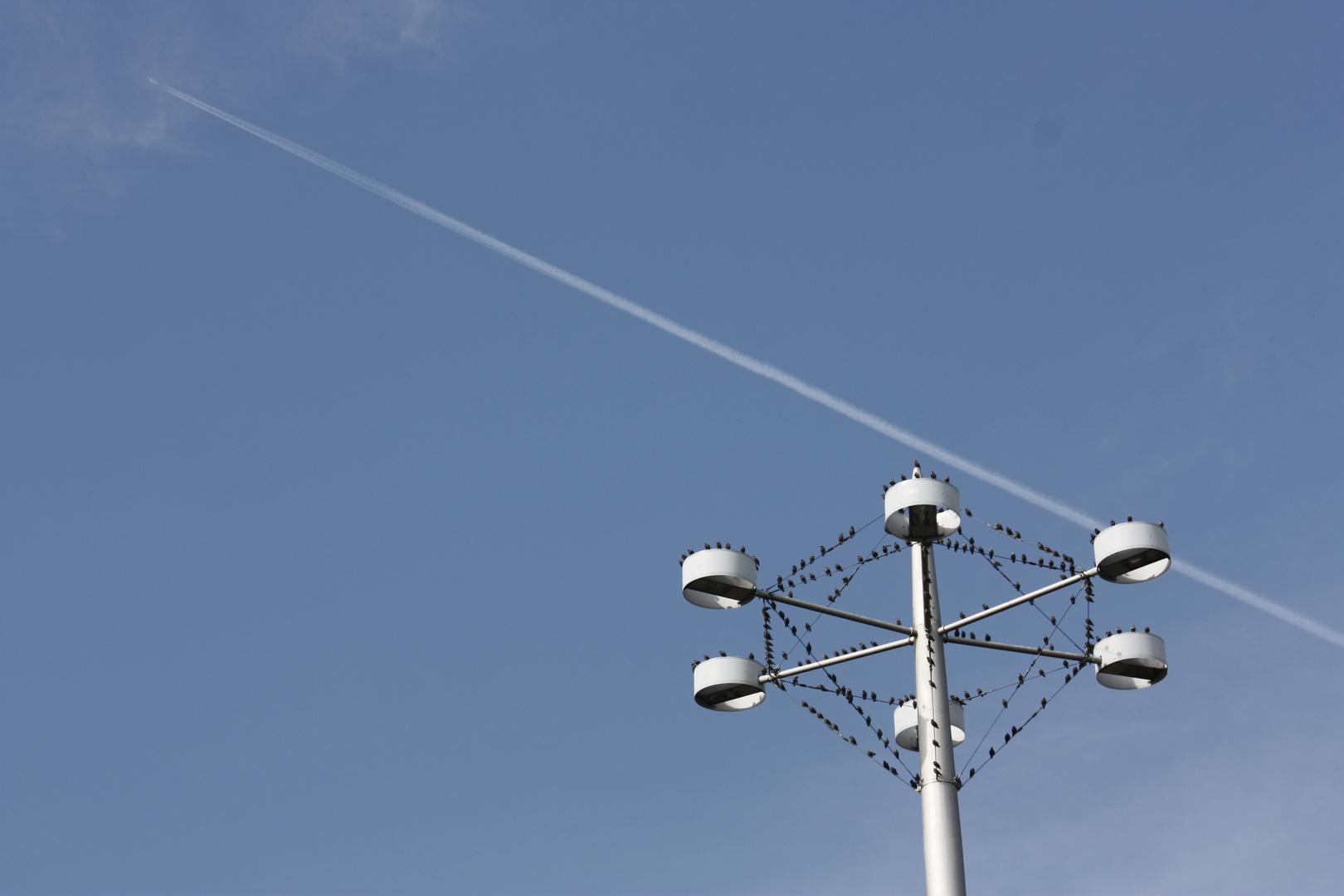 Vögeltreffpunkt bei Lichtturm