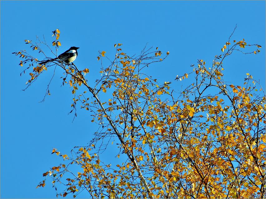 Vöglein im hohen Baum.......