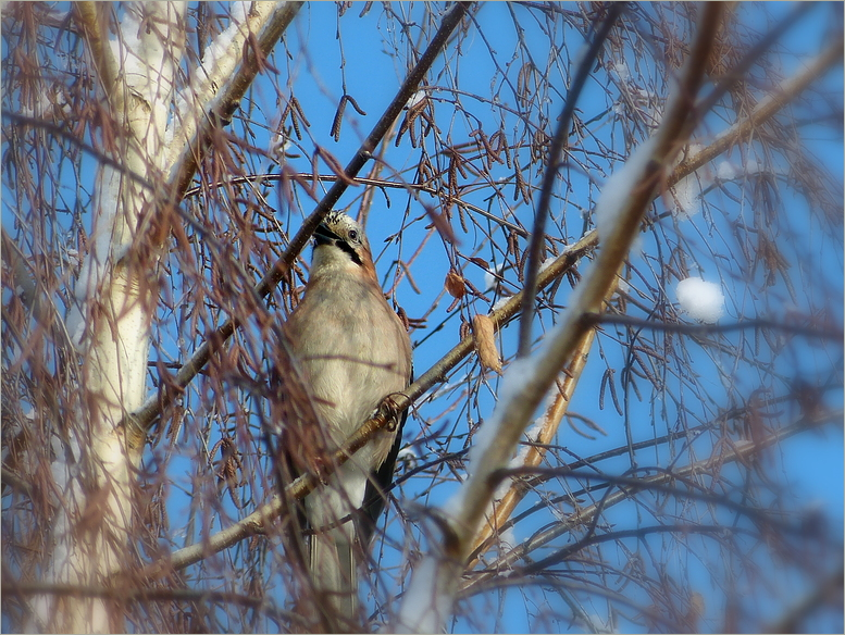 Vöglein im hohen Baum