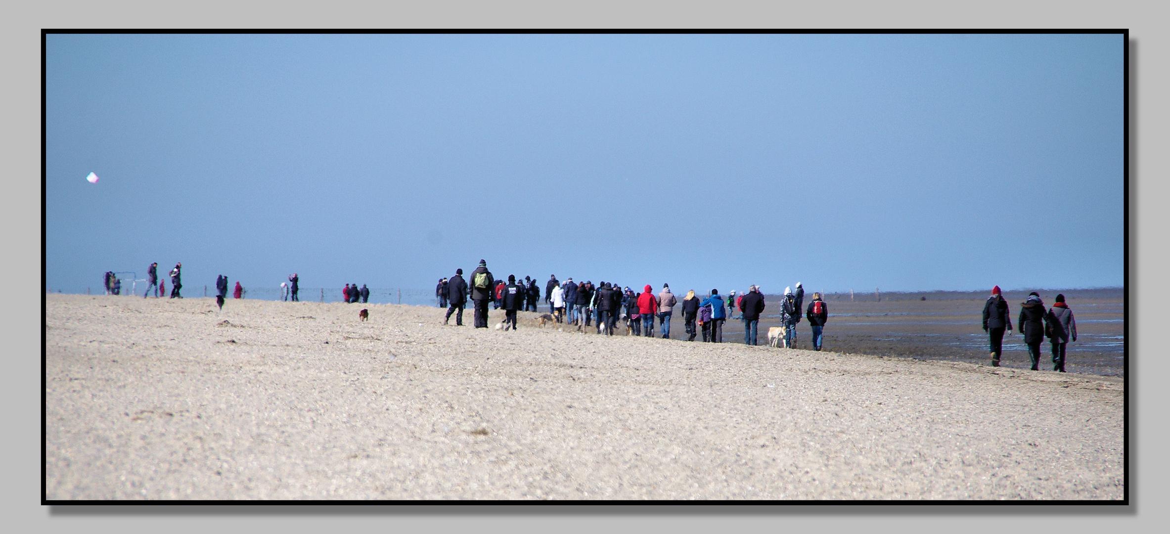 Völkerwanderung am Strand von Schillg