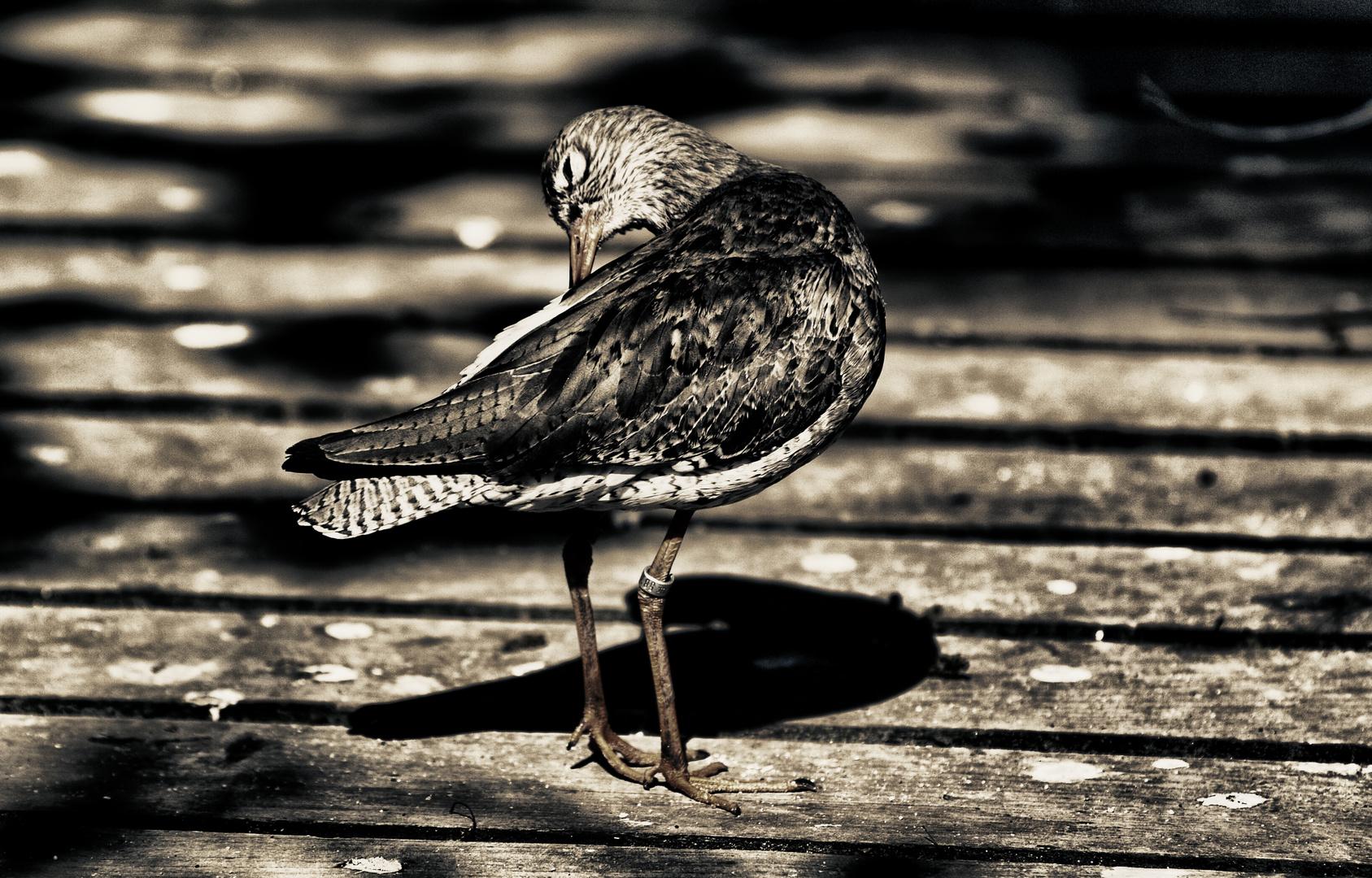 vogel ...