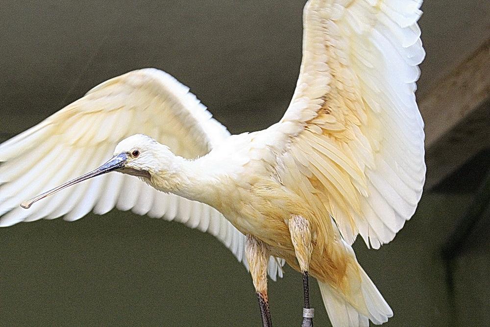 Vogel 12