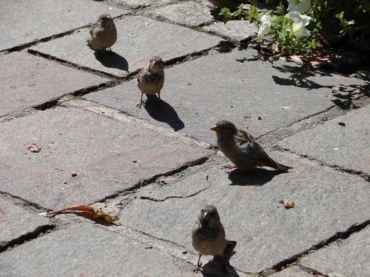 Vogel am Hauptplatz in Schladming