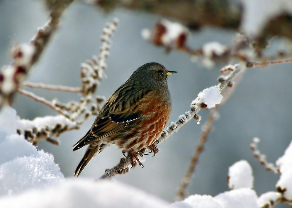 Vogel am Rande der Skipiste