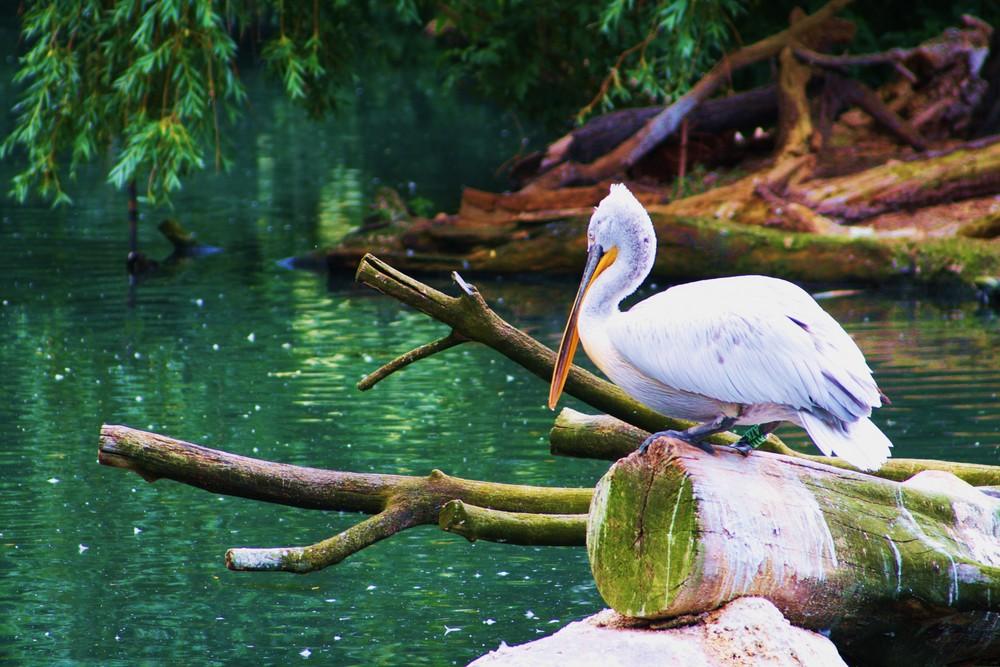 Vogel am Teich