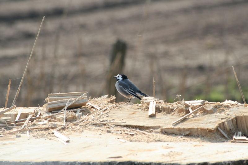 Vogel auf Baumstumpf