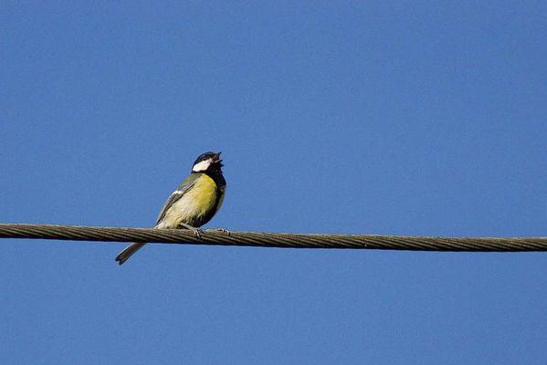 Vogel auf dem Drahtseil