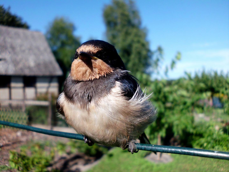 Vogel auf der Wäscheleine..