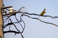 Vogel auf Draht / Bird on Wire
